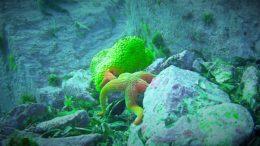 Biodiversidad bajo las aguas del Área Marina Costera Protegida de Múltiples Usos Pitipalena-Añihué, en una imagen: Estrella de mar (Stichaster striatus) junto a una esponja (Cliona chilensis)